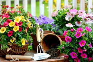 Blumen-Küche
